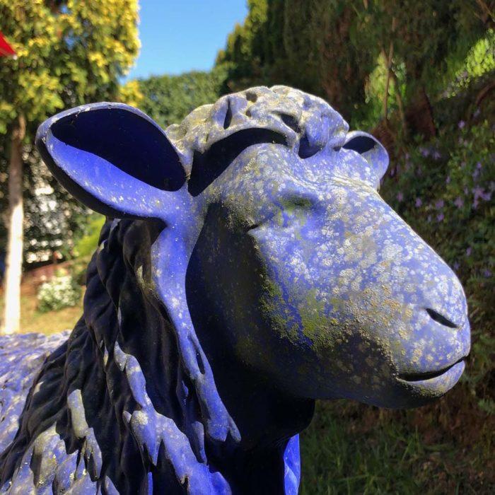 das blau Schaf